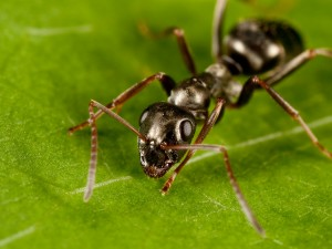 ant up close photo itch stimuli