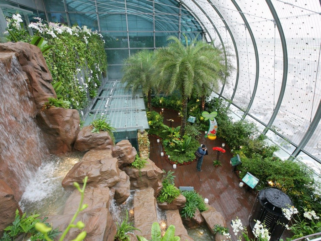 Singapore Changi Airport Butterfly Garden Nature