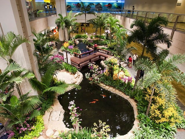Singapore Changi Airport-zen-garden