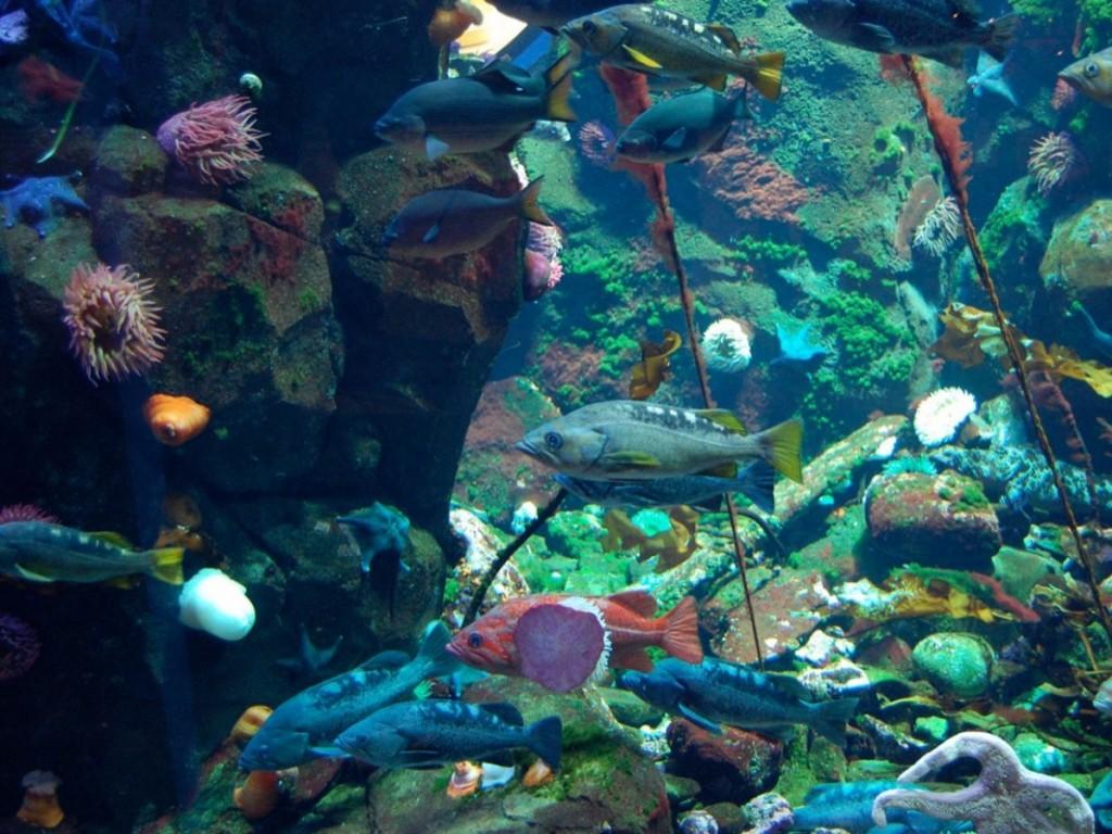 Vancouver International Airport with Aquarium