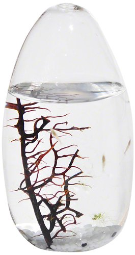 Ecosphere, Small Pod.