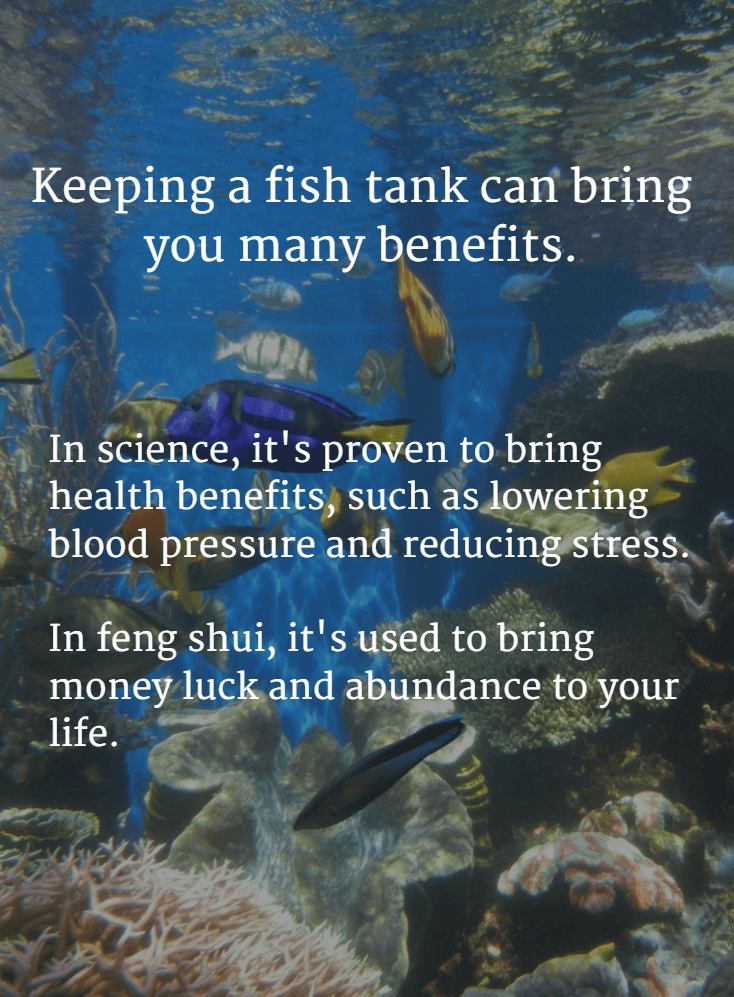 Fish tank science and feng shui benefits-min-min