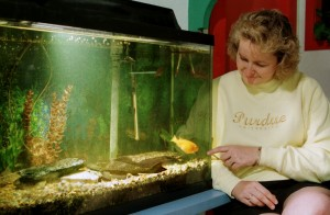 Science have found that fish tanks can help pacify Alzheimer's. Source: Purdue University.