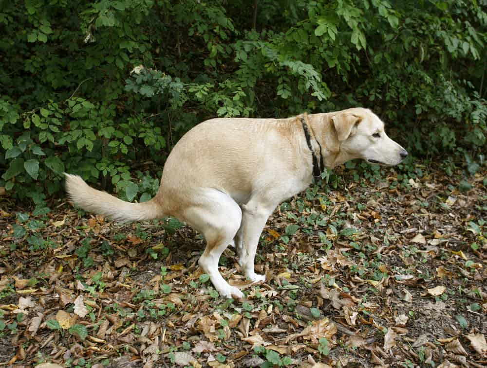 Scientists have observed that dogs poop along the North-South magnetic lines.