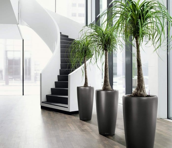 The larger the plant, the stronger the Wood energy. Not all areas are suitable for large indoor plants.