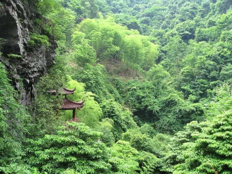 Forests have good Qi and are a good environment to live nearby. A house facing the forest takes advantage of such Qi.