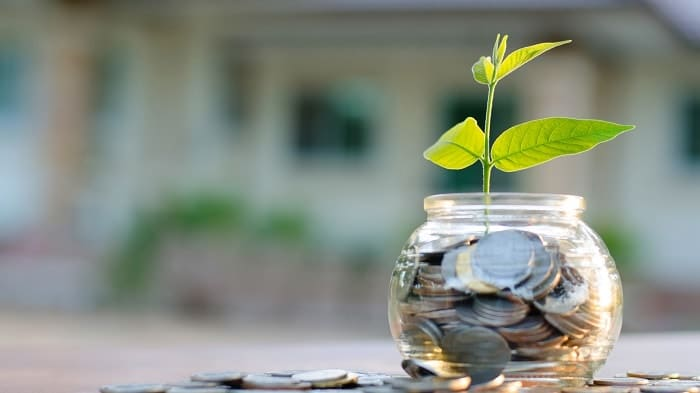 Feng Shui accumulate wealth plant growing in coins jar-min (Demo)