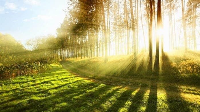 morning sunlight greenery trail woods walk healthy-min (Demo)
